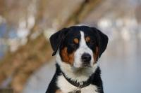 Portrait von Rocky